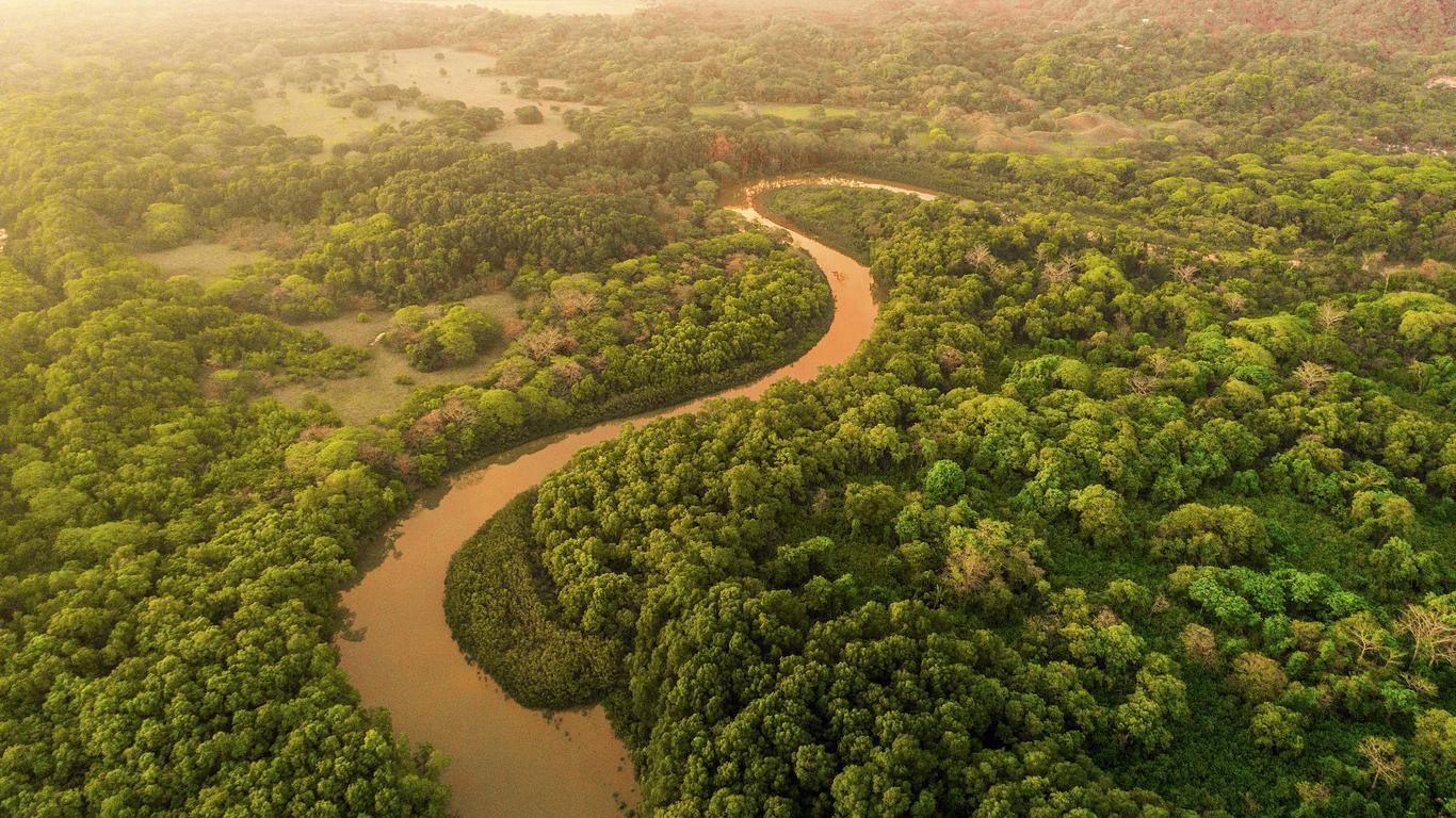 La jungle du Costa Rica